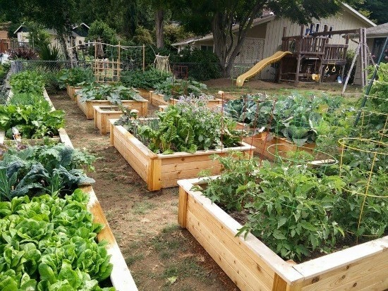 Grow Your Own Veggies March 4 2017